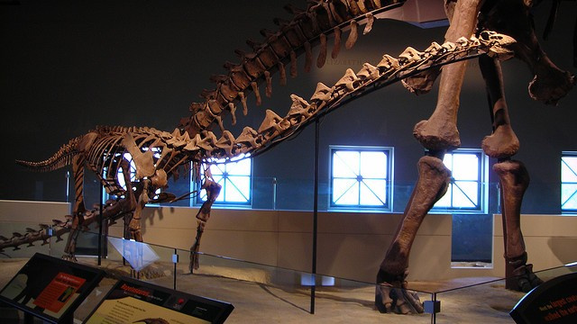 Why did some dinosaurs have giant hollow bones in their backs?