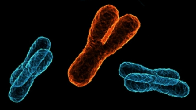 Don't Worry, Men: The Y Chromosome Isn't Dying Out