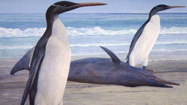 This giant penguin ruled New Zealand 25 million years ago