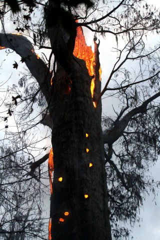 Woman admits to burning down 3,500-year-old tree while smoking meth