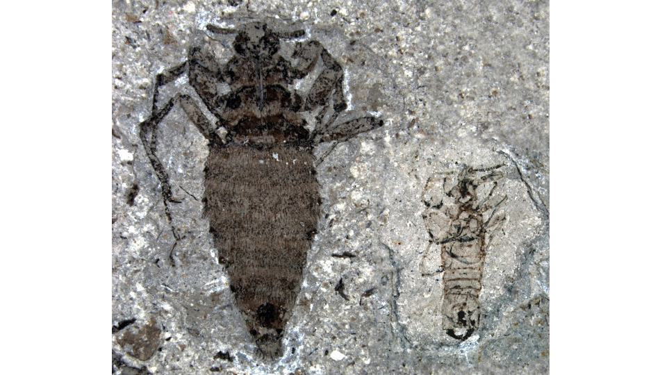 Click here to read Prehistoric Fleas Would Probably Eat Your Dog If They Still Existed