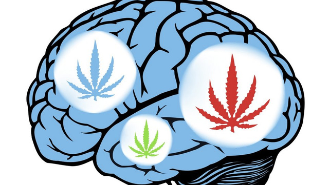Inside Your Brain on Cannabis: Cognitive Chaos