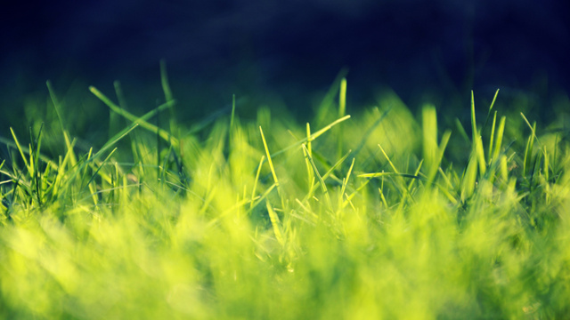 Let Your Desktop Play in the Grass with These Wallpapers