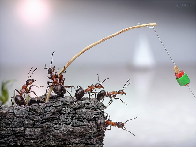 Fanciful photos reveal the whimsical secret lives of ants