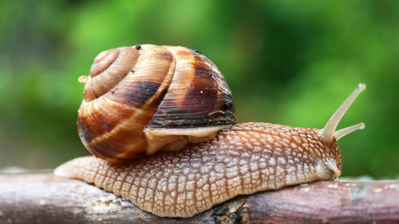 vampiric implants turn snails into tiny recon scouts