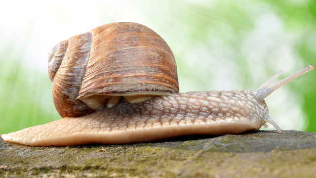 "Researchers have created electricity generating ""cyborg snails"""