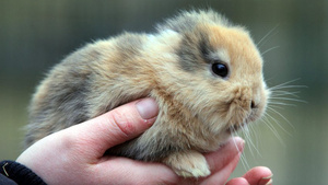Rare Baby Bunny Killed by Cameraman at Moment of Fame