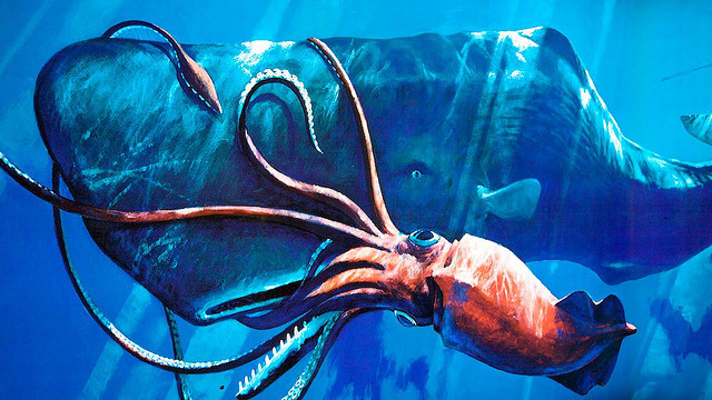 Squids evolved giant eyes to watch out for sperm whales