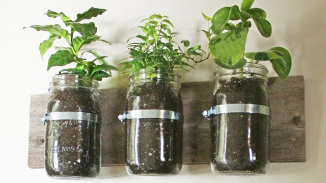 Click here to read Repurpose Mason Jars Into Wall Planters