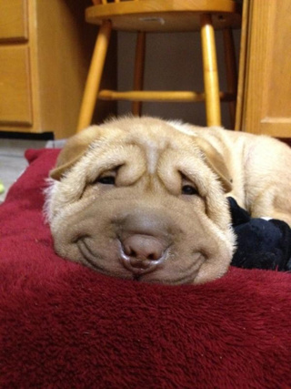 Smushy-Smile Dog Will Dissolve Your Heart Into a Pool of Joy