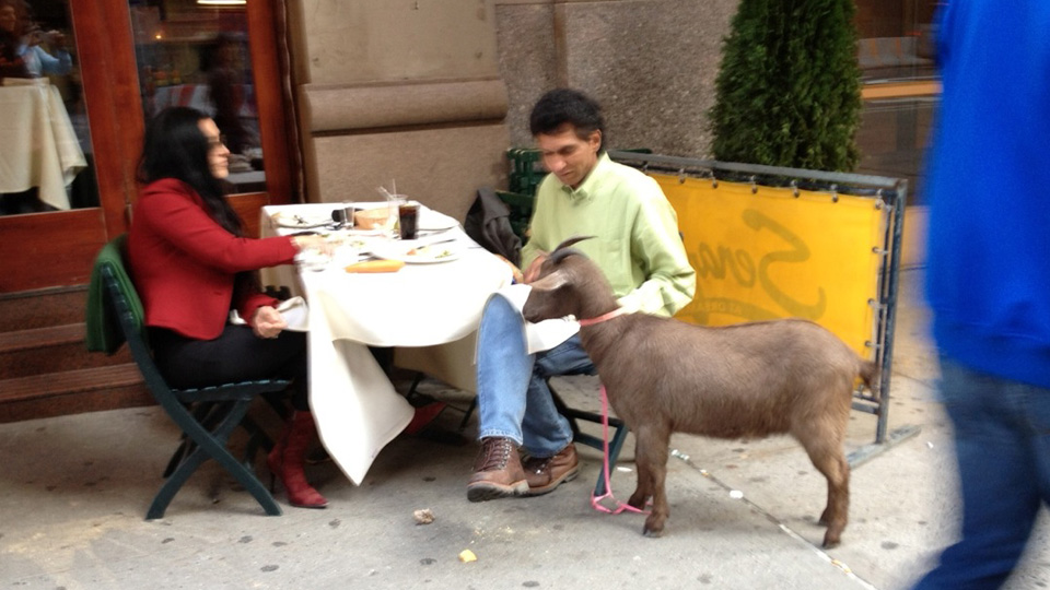 Click here to read Amazing Pizza Goat Spotted at Italian Restaurant