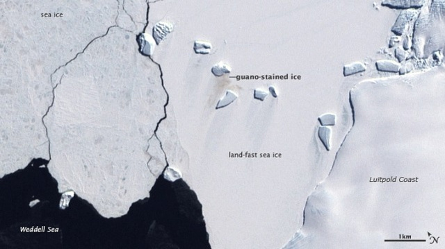 Penguin poop can be seen from space