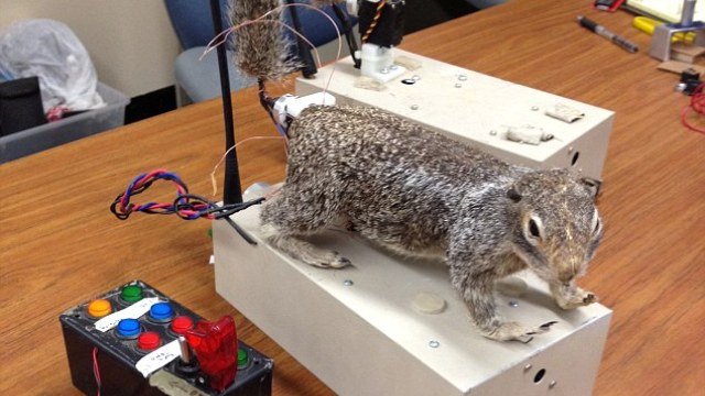 Robotic squirrels to battle it out with rattlesnakes