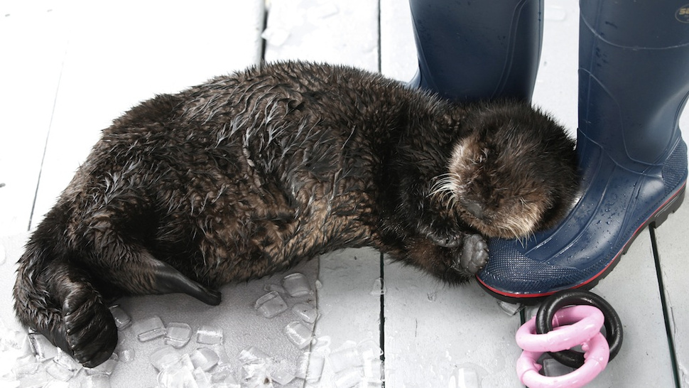 Otter-Proof Boots