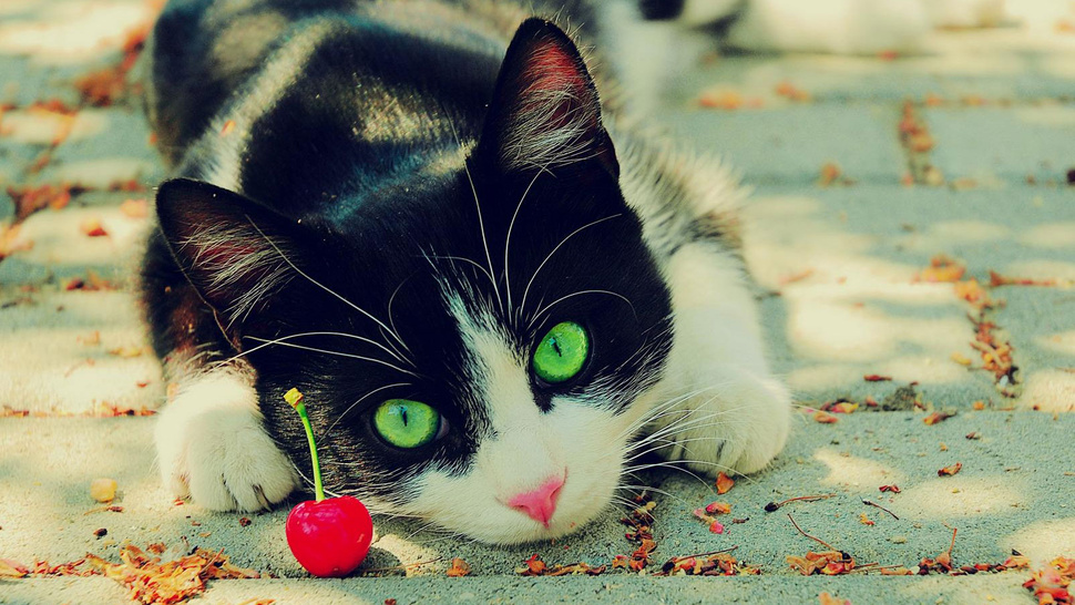 Wait, I'm Doing the Open Thread Tonight? Quick, Find Me a Cat With a Cherry!