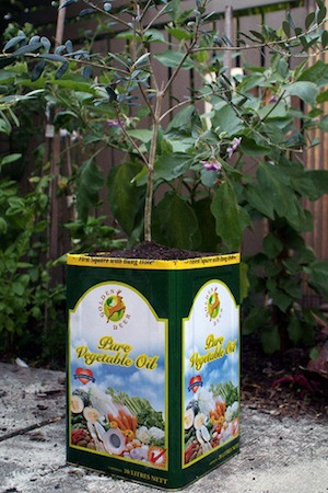 Click here to read Make a Quick, Easy Garden Planter from an Empty Cooking Oil Can