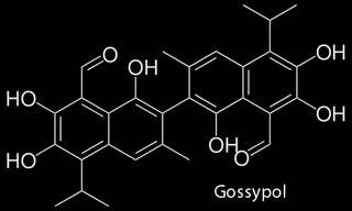 Gossypol, the Chemical Commonly Found in Cotton That is Also a Male Contraceptive