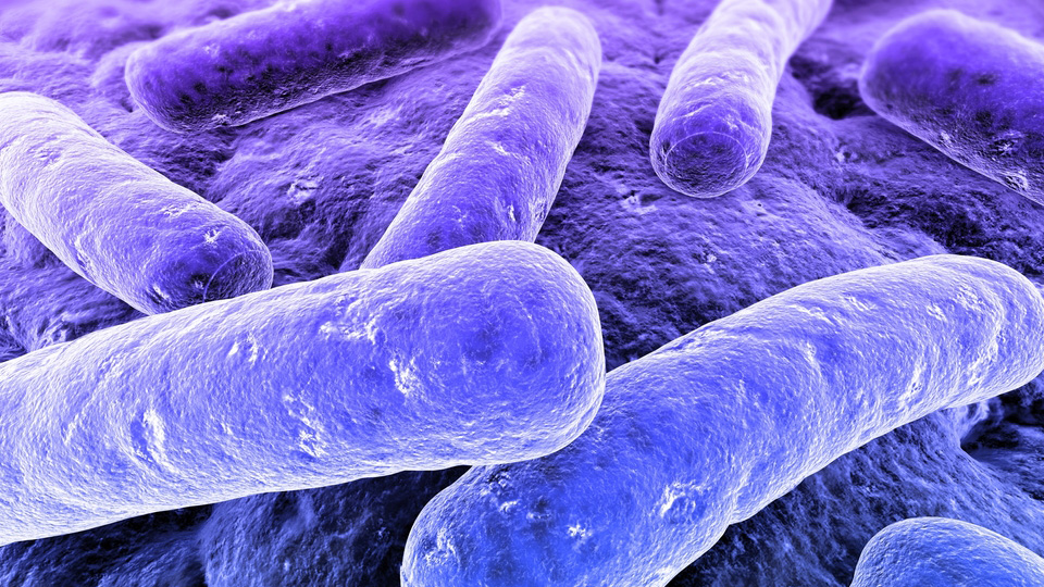 Click here to read Millennia-Old Strains of Bacteria Can Resist Drugs They've Never Met