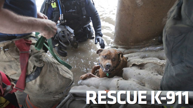This Amazing Dog Rescue May Be The Coolest Thing You'll See Today