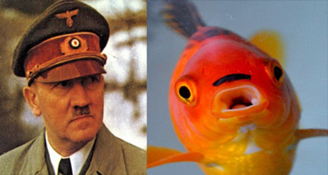 stop the presses this fish looks like