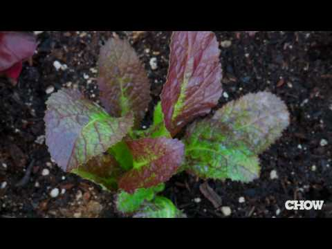 Click here to read Plant a Salad Box in Your Garden for Fresh, Healthy, and Tasty Salads Every Night