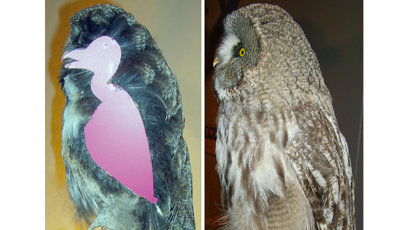 Click here to read Owls Aren't So Intimidating Without All Their Feathers