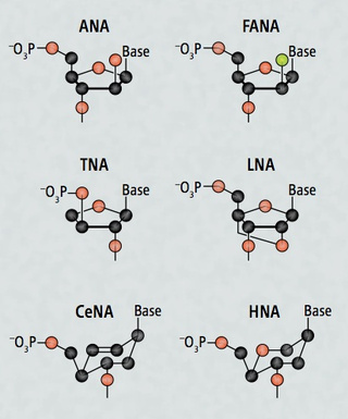 XNA is synthetic DNA that's stronger than the real thing