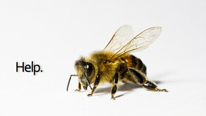 Biotech Company Blamed for Bee Collapse Buys Leading Bee Research Firm