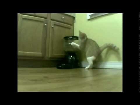 Click here to read Cat Figures Out How to Get Free Food from Auto-Feeder
