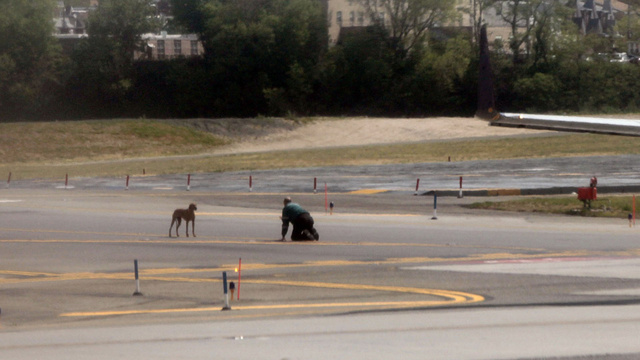 Escaped Puppy Runs on to Runway and Causes Cutest Airport Delay Ever