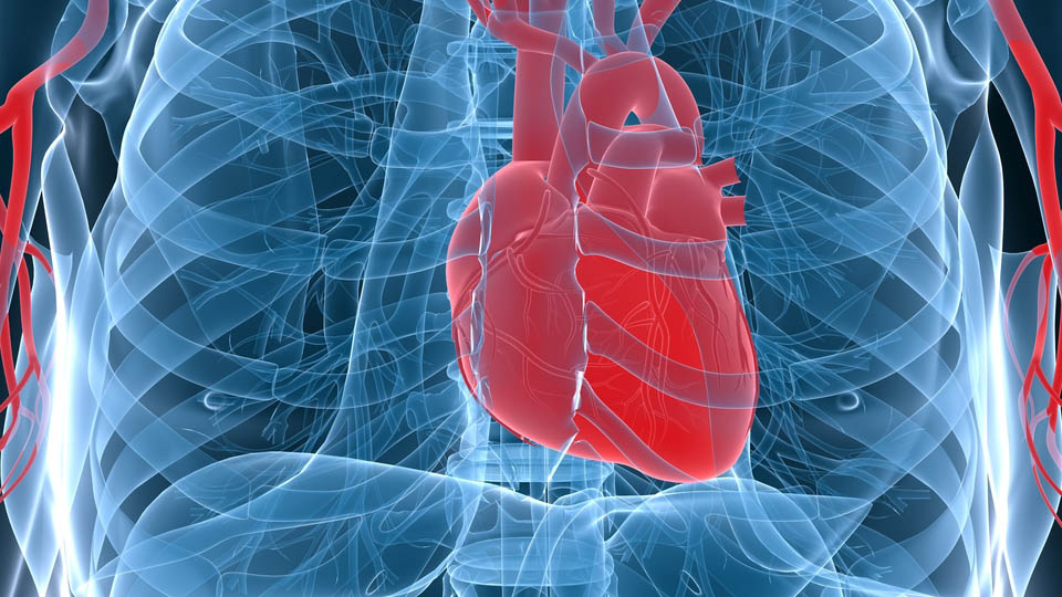 Click here to read New 3D Images Let Doctors See What Causes an Irregular Heartbeat