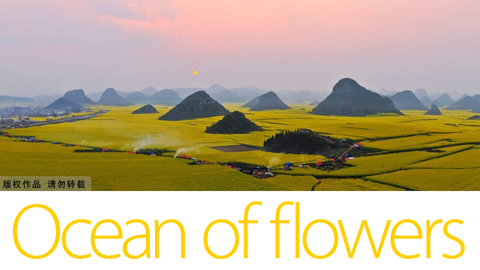 This Never Ending Ocean of Flowers Will Overwhelm Your Senses