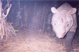 Rhino cameras will help watch endangered giants