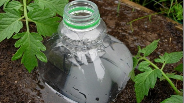 Click here to read Repurpose a Soda Bottle Into a DIY Irrigation System