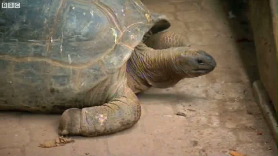 Click here to read 86 Year-Old Man Lives on His Own Tropical Island With 120 Giant Tortoises