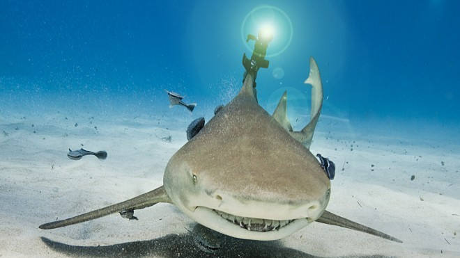 Real Lasers On Real Sharks