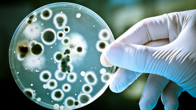Scientists Discover How to Disarm Superbug Bacterias