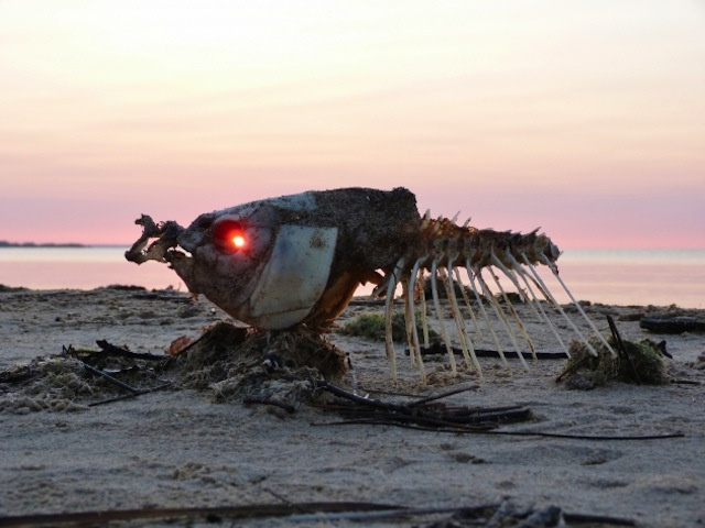 Incredible photograph of the sunrise glowing through a dead fish's eye