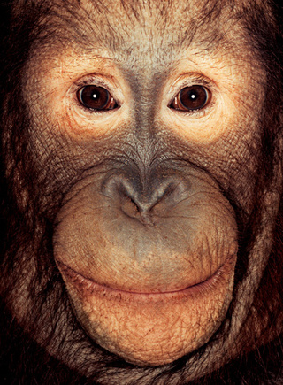 Primate portraits invite you to see apes as individuals