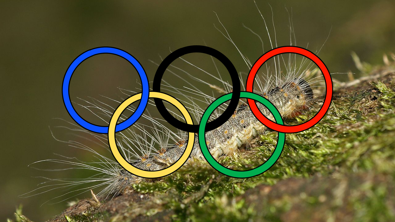 Click here to read There Is a Poisonous Alien Caterpillar Threatening to Invade the London Olympics. Seriously.
