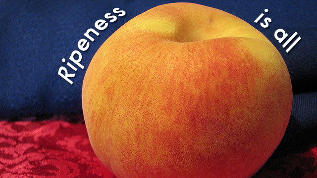 "Click here to read ""Ripeness Is All"""