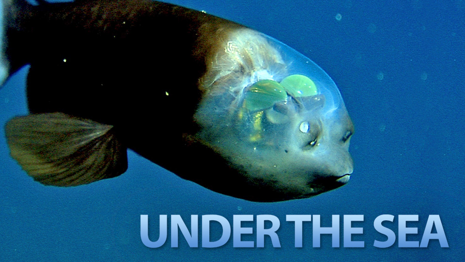 Click here to read The Seven Weirdest Creatures Under the Sea