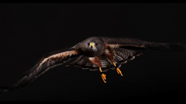 Click here to read Photographing Birds of Prey is Really Friggin' Hard