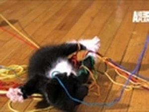 Loving Kittens Playing In Super-Slow Motion Obviously Is a Cute Overload