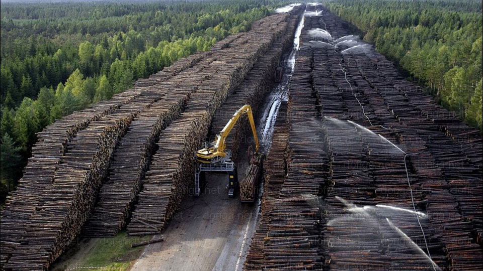 The Biggest Wood Storage Area In The World Is Absolutely Insane