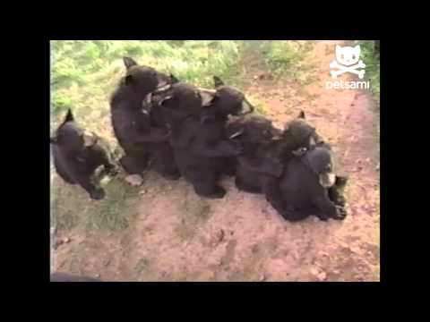 Click here to read Ten Baby Bears Celebrate Mother's Day By Dancing the Conga