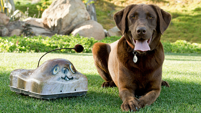$300 RC Critter Is Your Dog's New Best Friend