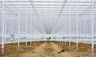Farmers Put 220 Acres Under Glass to Create Vast Artificial Environment