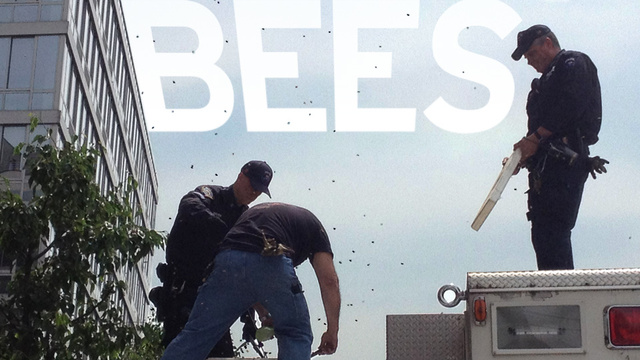 HOLY SHIT BEE ATTACK IN NEW YORK CITY