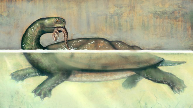 Ancient Car-Sized Turtles Hung Out With Titanoboas